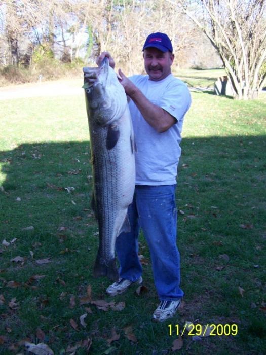 1129bigfish